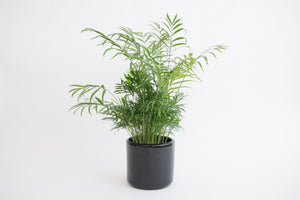 "6"" Pot / Planter - Matte Black Cylinder"