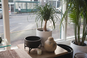 Modernica | Case Study Small Bowl