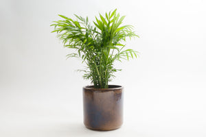 "6"" Pot / Planter - Sunset Cylinder"