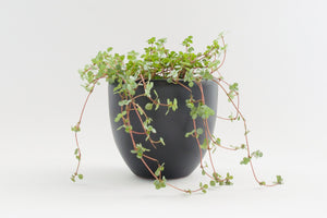 "7"" Pot / Planter - Matte Black Bell"