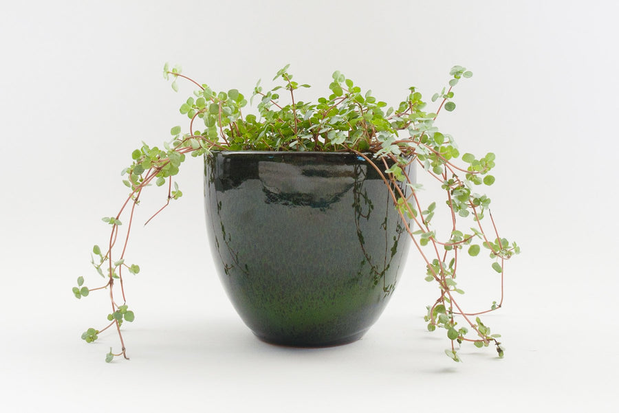 "5"" Pot / Planter - Wasabi Bell"