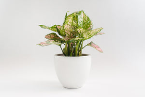 "7"" Pot / Planter - Gloss White Bell"
