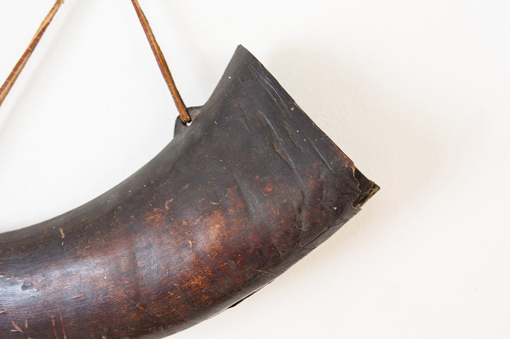 Bison Horn Wall Art