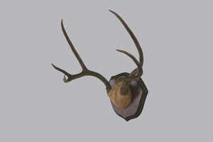 Six-Point Deer Antlers