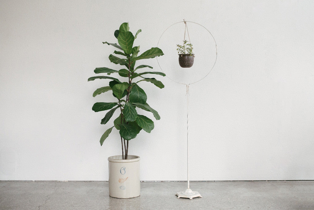 Hanging Plant Stand Homestead Seattle