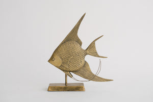 Brass Angelfish