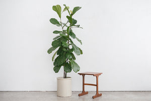 G Plan Side Table