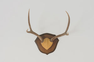 Vintage Four-Point Antlers