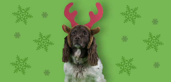 Merry Christmas from Clover the office dog -  and all of us at Snakehive