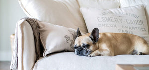 Eco-Friendly Pet Couch Covers To Keep Your Family Cozy This Winter