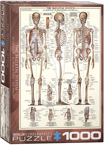 The Skeletal System Puzzle