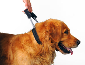 PATENTO PET- Collar Sport