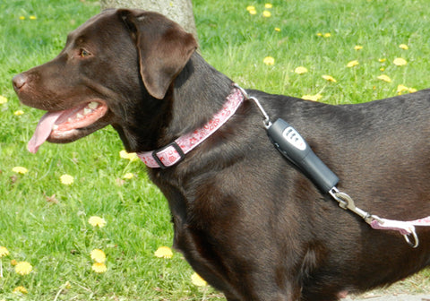 Patento Pet - Dog E-Walk Basic