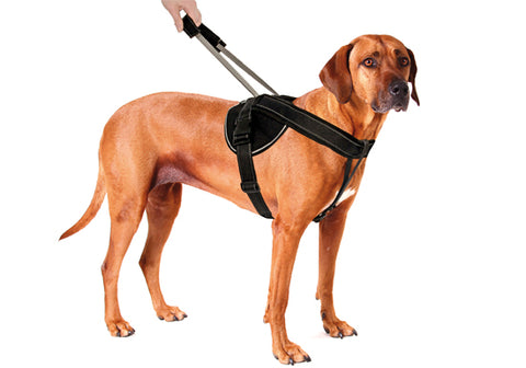 PATENTO PET - Harness Premium