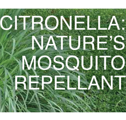 OUTDOOR SCENTS - CITRONELLA