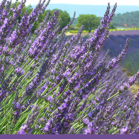 No 7. PROVENCE LAVENDER -100% pure natural essential oils & botanicals