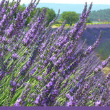 No 7. Provence Lavender -- 100% pure natural