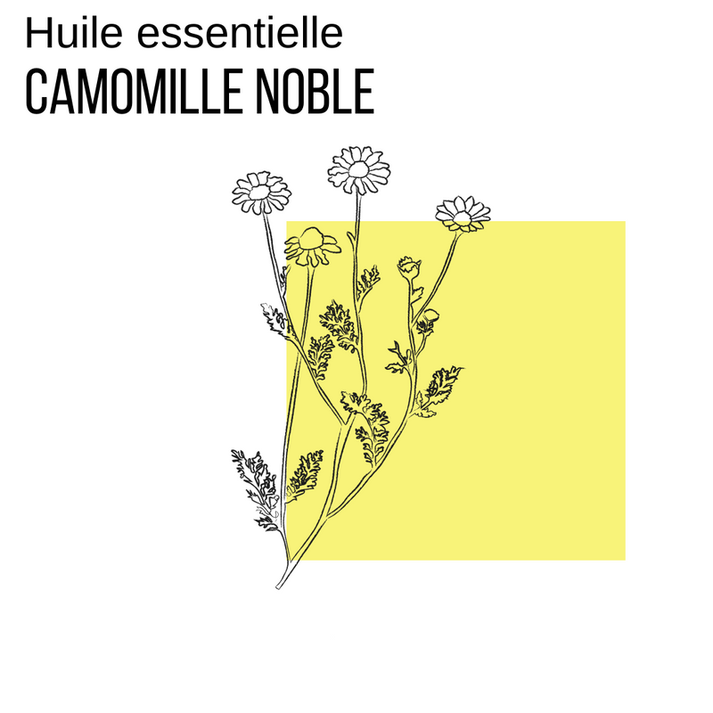 Camomille noble
