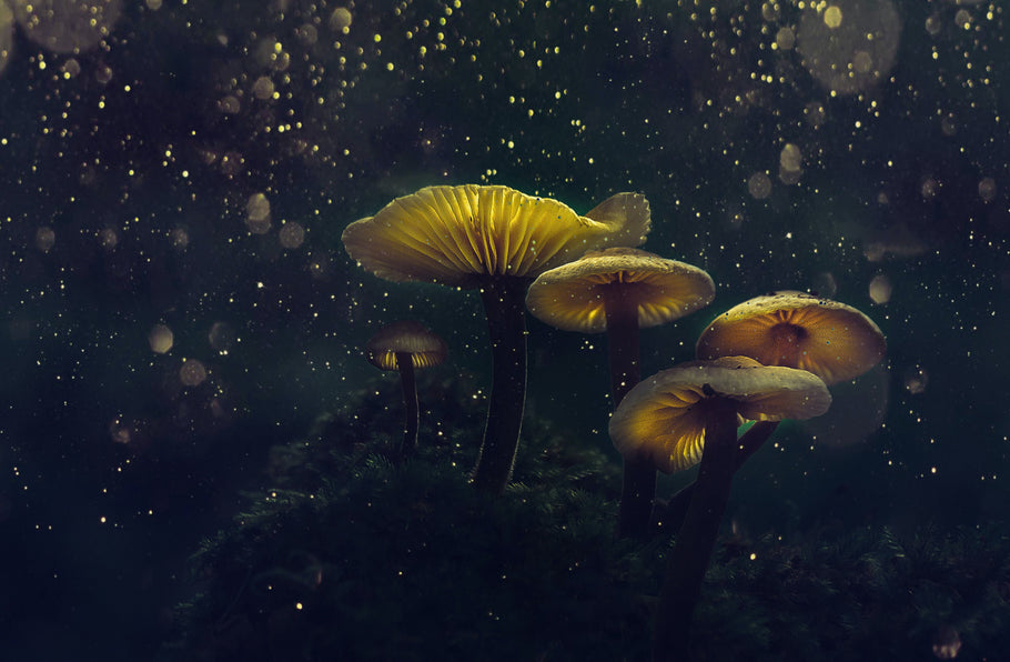 How Magic Mushrooms Could Potentially Save Us and the World
