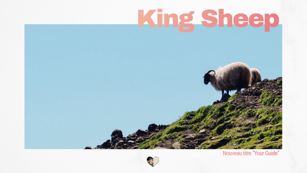 King Sheep montre le chemin