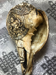 Conch Shell with Dzambhala Family(TGCS 2)
