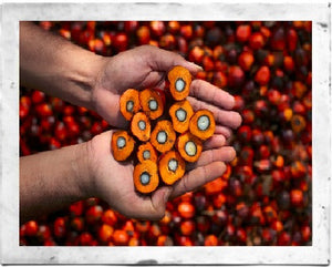 Why you shouldn't boycott palm oil