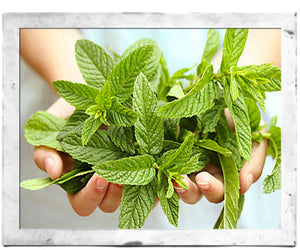 5 Benefits of Peppermint Oil