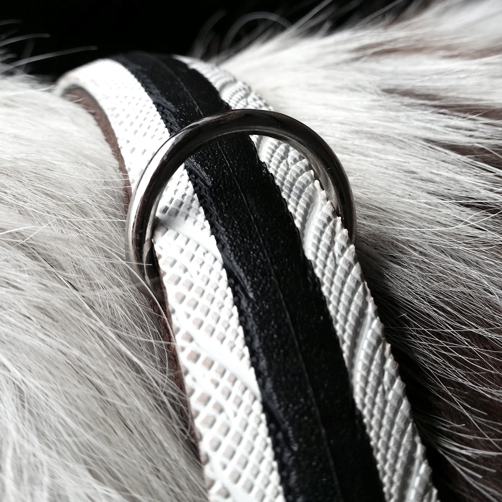 White Road Dog collar