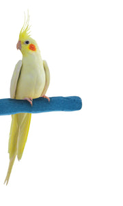 Patented Safety Perch™ - Small - Sweet Feet & Beak