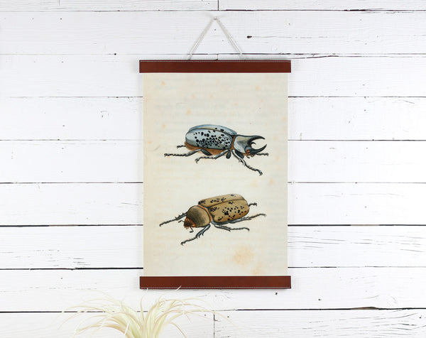 Beetles - Poster Frame Wholesale