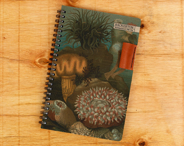 Coral Reef - Notebook