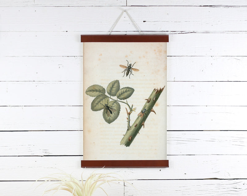 Rose Thorns - Poster Frame Wholesale