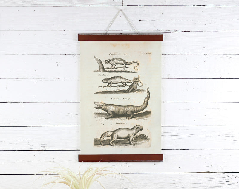 Reptiles - Poster Frame Wholesale