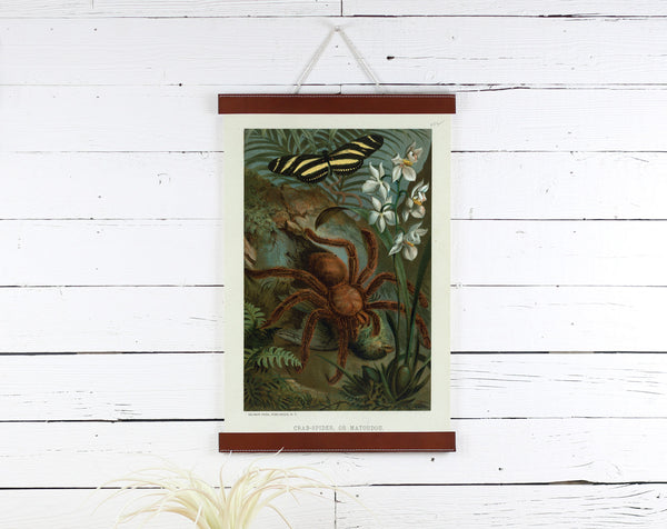 Spider - Poster Frame Wholesale