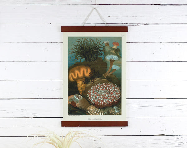 Sea Anemone - Poster Frame Wholesale