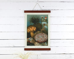 Sea Anemone - Poster Frame