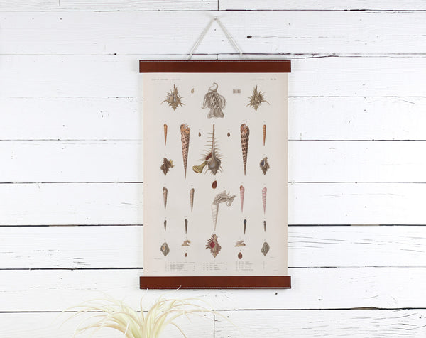 Sea Shells - Poster Frame