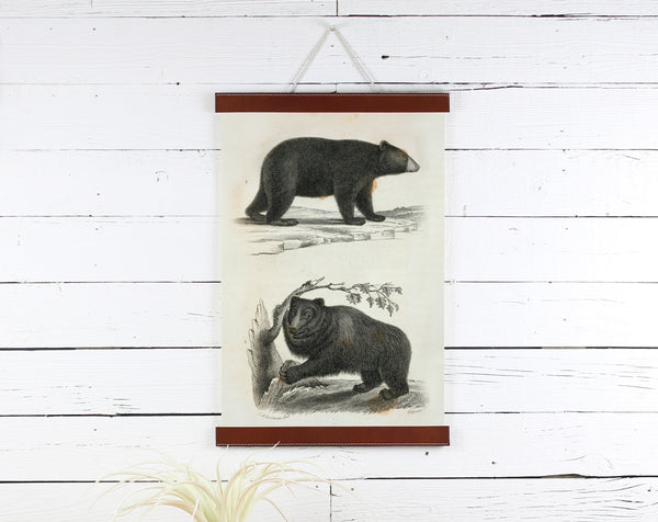 Bear - Poster Frame Wholesale