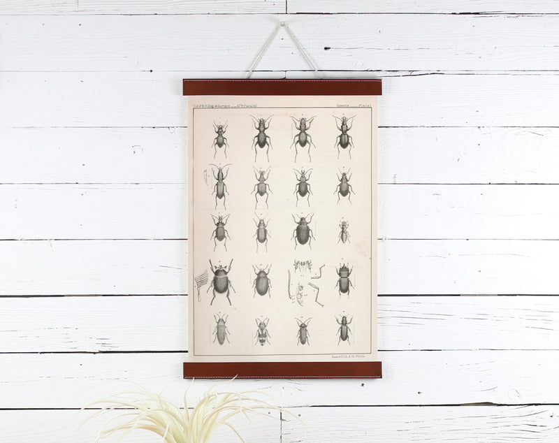 Bugs - Poster Frame Wholesale