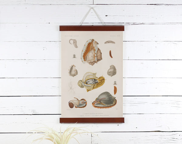 Snails - Poster Frame Wholesale