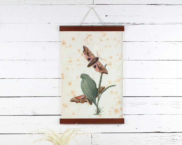 Moths - Poster Frame Wholesale