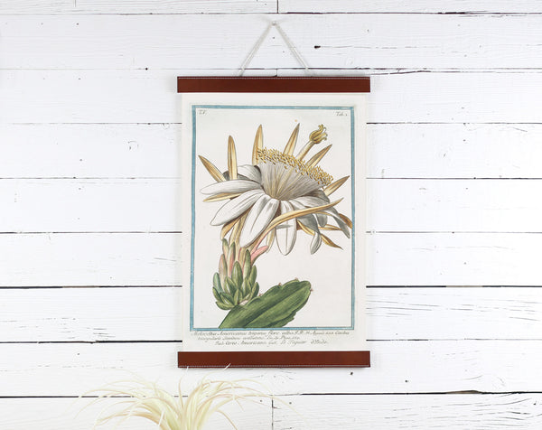 Cactus Flower - Poster Frame Wholesale