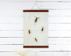 Insects - Poster Frame