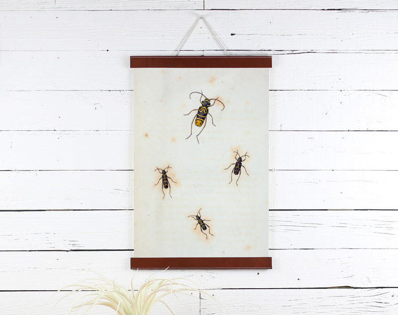 Insects - Poster Frame Wholesale
