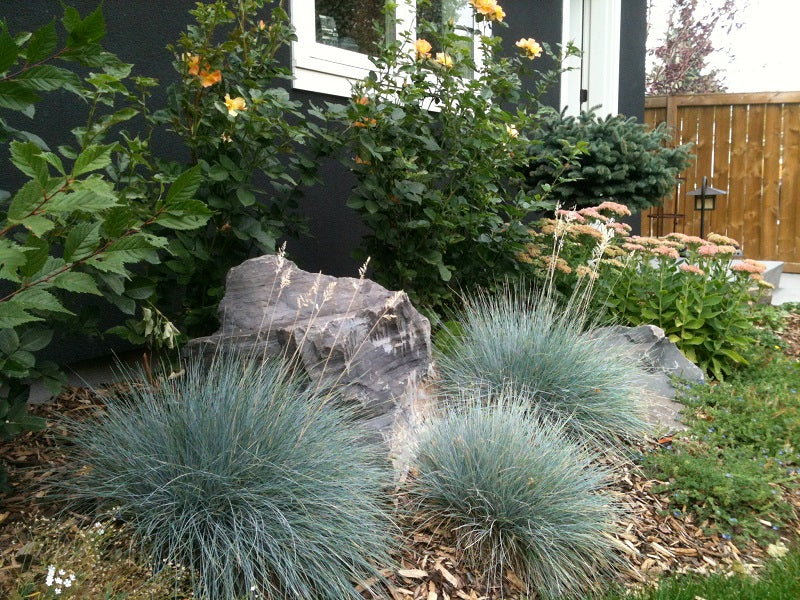 A beautiful landscaping rock and plant