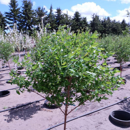 Trees - edible trees, including apple trees and more