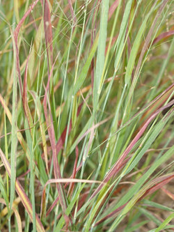 Grass - Shenandoah Reed Switch