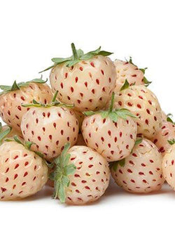 Strawberry - Pineberry