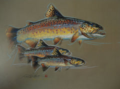 Brown Trout - Print of Pastel Drawing