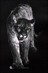 Mountain Lion - Scratch Board Print